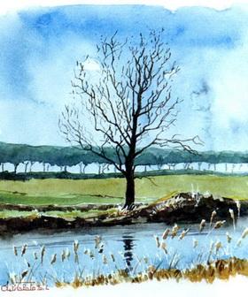 Пейзаж с одиноким деревом у ручейка